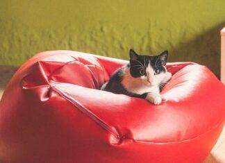 Zdrowe przysmaki, które warto zapewnić swojemu kotu